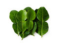 Kaffir Lime Leaves Royalty Free Stock Photos - 24533838