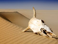 Death In The Desert Royalty Free Stock Photos - 24535928