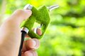 Hand Holding Eco Fuel Nozzle Royalty Free Stock Image - 24551056