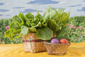 Fresh Organic Vegetables Royalty Free Stock Image - 24580056