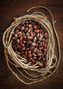 Pine Nuts Royalty Free Stock Photo - 24581275