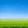 Field Of Green Grass Over Blue Sky Royalty Free Stock Image - 24606586