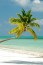 Palm Tree On Ocean Beach Royalty Free Stock Photography - 24609827