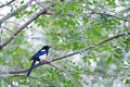 Magpie Stock Photography - 24620622