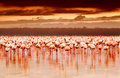 African Flamingos On Sunset Stock Photography - 24626442