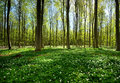 Spring Forest Stock Photography - 24627372