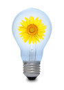A Light Bulb With Sunflower Inside. Royalty Free Stock Images - 24630099