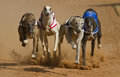 Dogs Racing Royalty Free Stock Photography - 24634057
