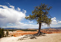 Lone Tree Royalty Free Stock Image - 24636146
