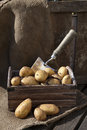 Potatoes 6 Stock Images - 24636224