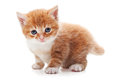 Ginger Kitty Stock Photography - 24654092