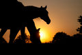 Two Horses Silhouetted Against Rising Sun Royalty Free Stock Image - 24654776