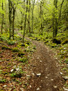 Path In The Wood Royalty Free Stock Images - 24688239