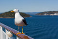 Seagull On Handrail Stock Photography - 24688392