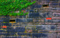 Stone Wall With Ivy Stock Image - 2473661