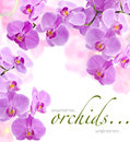 Orchid Flowers Royalty Free Stock Photography - 24703637