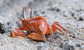 Ghost Crab Stock Photos - 24704123