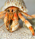 Beautiful Hermit Crab In His Shell Close Up Stock Images - 24713124