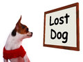 Lost Dog Sign Showing Missing Or Runaway Puppy Stock Image - 24720561