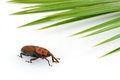 Red Weevil Insect Stock Images - 24760044