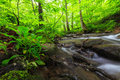 Vibrant Green Foliage And Stream In The Forest Royalty Free Stock Photo - 24760435