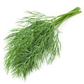 Green Dill Stock Photo - 24767980