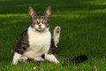 Cat Playing Outdoors On The Grass Royalty Free Stock Images - 24852259