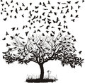 Crows In A Tree Royalty Free Stock Photography - 24862867