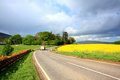 Rural Scottish Road With Fields Of Rape Royalty Free Stock Photos - 24863558
