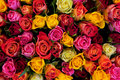 Colorful Roses Background Royalty Free Stock Image - 24864596