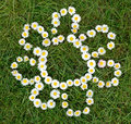 Daisy Flowers Composition Royalty Free Stock Photo - 24876115