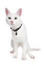 White Ragdoll Cat With Green Eyes Royalty Free Stock Images - 24876279