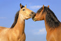 Two Horses On The Sky Background Stock Image - 24884951