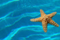 Starfish Stock Photos - 2491413