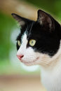 Face Of Cat Royalty Free Stock Image - 24900706