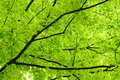 Green Leaves Stock Photography - 24901042