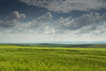 Green Wheat Field With Blues Sky And Clouds Stock Photos - 24915473