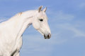 White Horse Portrait On The Sky Background Stock Photography - 24919532