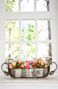 Flower Pot In Front Of A Window. Stock Photography - 24919932