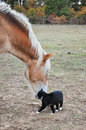 Cat And Horse Stock Images - 24937074