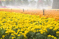 Sprinklers Watering The Flowers Royalty Free Stock Photography - 24978237