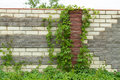 Brick Wall With Ivy Stock Images - 24980974