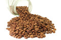 Coffee Beans Royalty Free Stock Photo - 24983005
