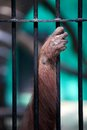Hand Monkey In A Cage Royalty Free Stock Photos - 24987648