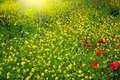 Field With Buttercups Stock Photos - 24993943