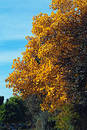 Golden Fall Stock Photo - 257350