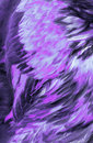 Abstract Lilac Feathers Royalty Free Stock Photography - 2502017