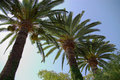 Palm Trees Stock Photos - 2507183