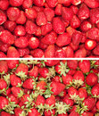 Strawberry Royalty Free Stock Photography - 25019967