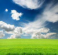 Sky With Green Grass In The Field Royalty Free Stock Images - 25026699